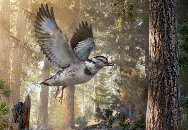 Penelitian A New Clade of Basal Early Cretaceous Pygostylian Birds and Developmental Plasticity of the Avian Shoulder Girdle