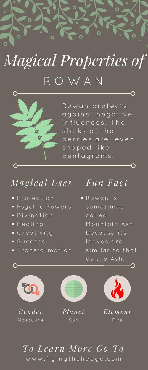 Magical Properties of Rowan