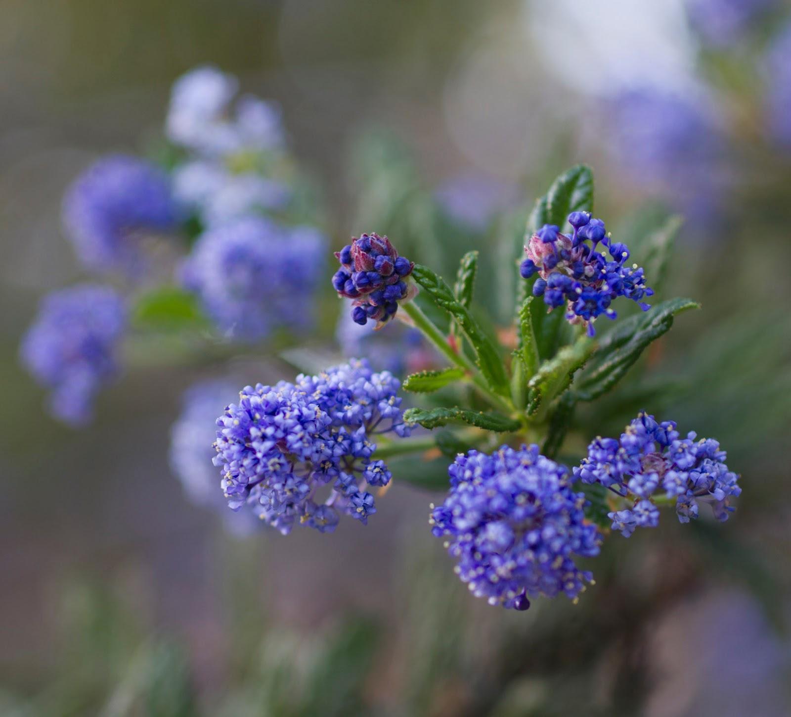 Roxana illuminated perfume spring flowers spring flowers mightylinksfo