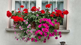 frequent Italian balcony/ windowsill decoration- flowers