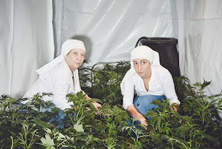 monjas weed