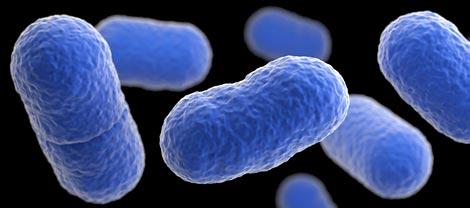Mengenal Bakteri Listeria, Hati-Hati Makan Buah Melon!