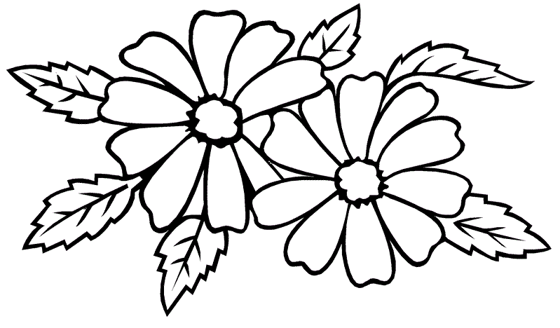 Gambar Bunga Hitam Putih Simple Gambar Bunga