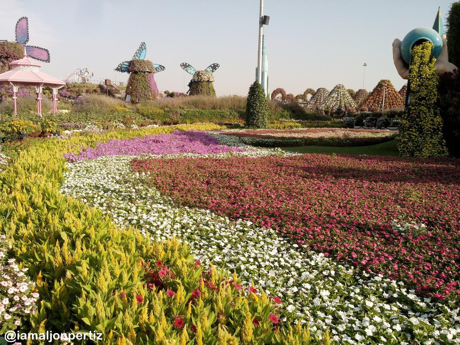 Dubai Miracle Garden: A Paradise in the Desert