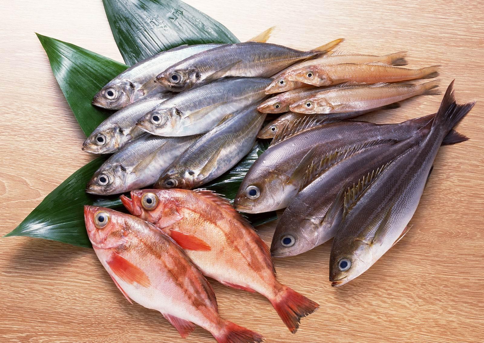 Fish Food Canada