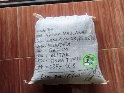 Benih Padi Pesanan  MOH. ISKHAK M. Blitar, Jatim  Benih Sesudah di Packing