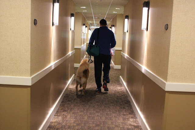 A dog walking the halls of Two Trees Inn Pet Friendly Hotel