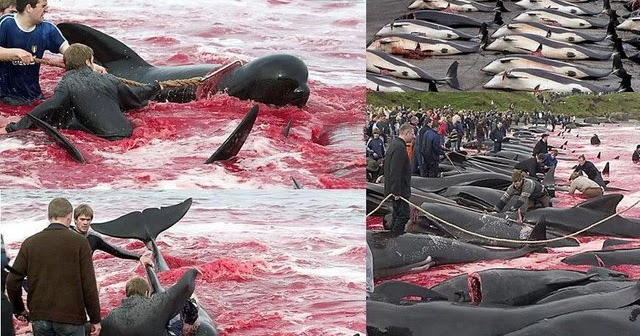Activating Thoughts Denmark Dolphin Killing Festival