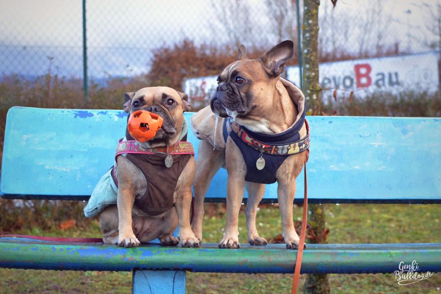 Hundeblog Französische Buldogge Regenmantel Wintermantel Hundemantel Felix Bühler