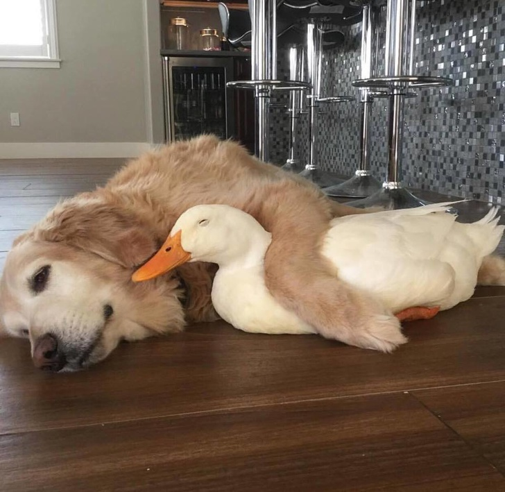 23 Heartwarming Pictures That Made Us Love Animals Even More