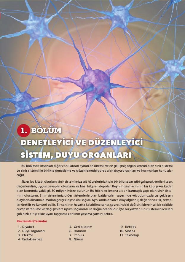 11. Sınıf Biyoloji Ders Kitabı Cevapları Köke Yayınları Sayfa 16