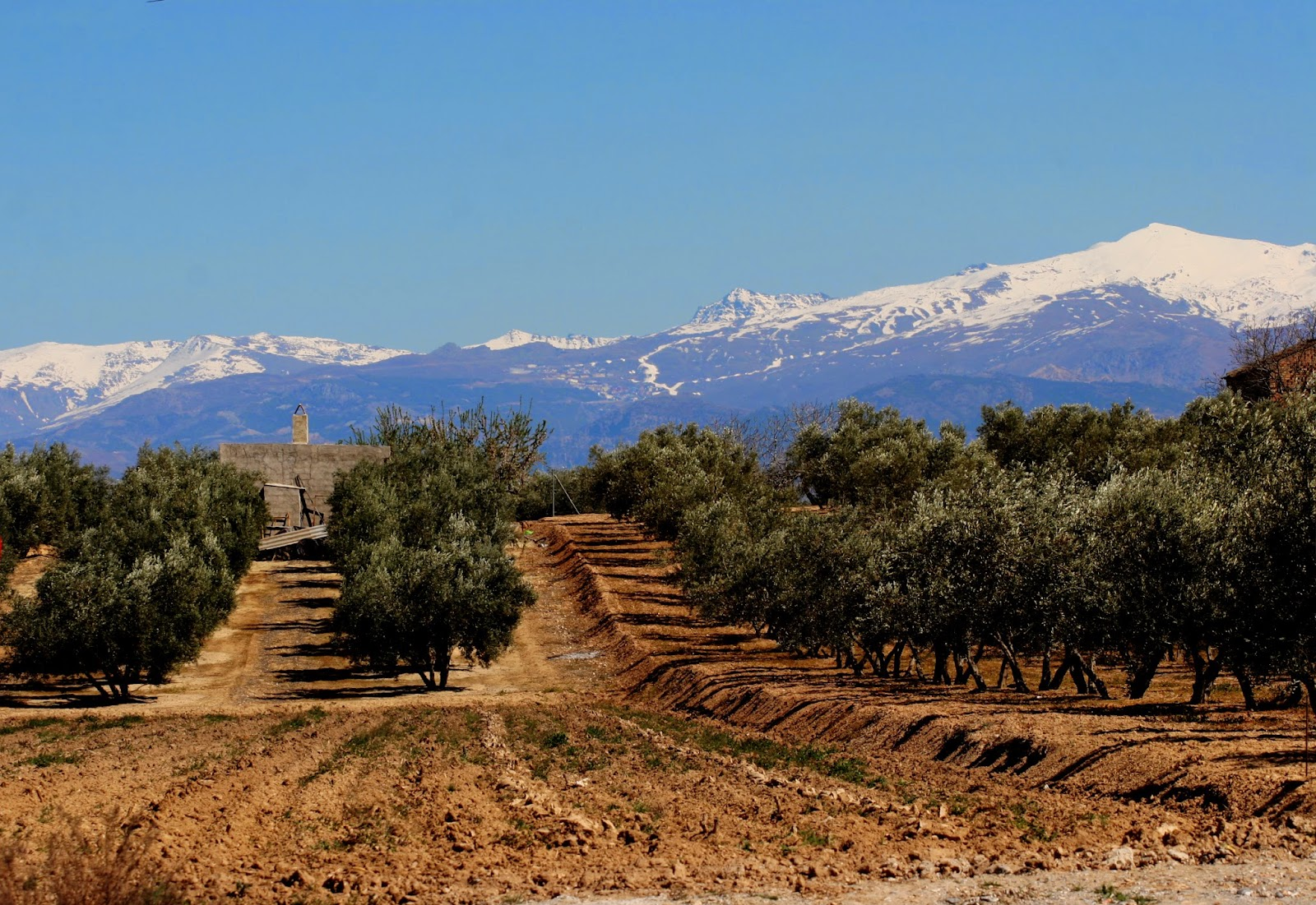 Cycling in Granada on a Bike Tour and seeing the Sierra Nevada, Andalucia