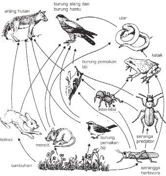 3 Contoh Jaring Jaring Makanan Pada Ekosistem Savanna Smansa Edu