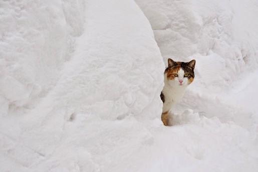 Obroże odblaskowe dla kotów