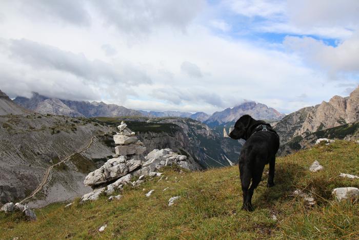 Wandern mit Hund in Südtirol