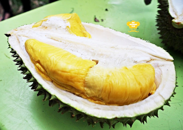 Raub Durian Farm Orchard Visit And Durian Buffet @Durian Wonderland