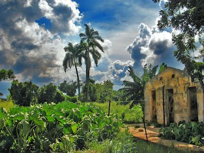Paysage rural de Cuba