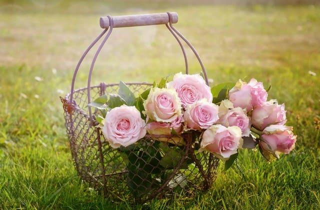 Makna bunga mawar pink, bisa untuk teman tapi bisa juga untuk kekasih