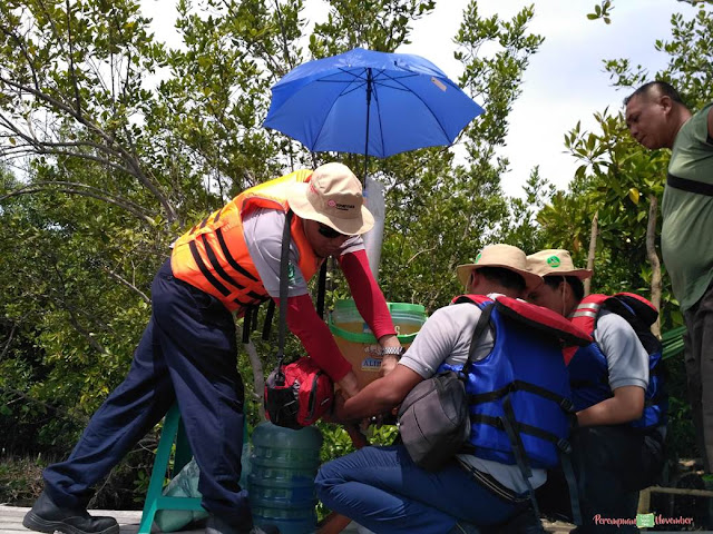 wisata mangrove belawan