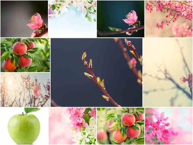 تحميل 12 صورة عالية الجودة لخلفيات الربيع