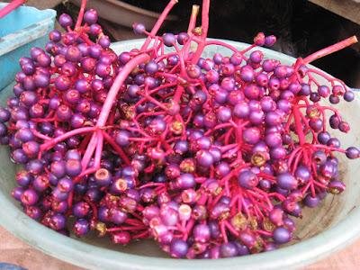 khasiat buah parijoto
