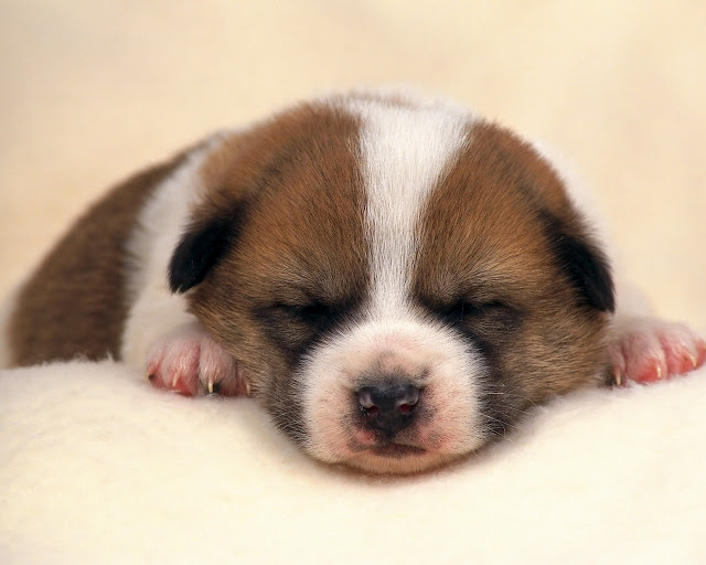 New Images For Dog Wallpaper Cute Funny Beautiful Puppies