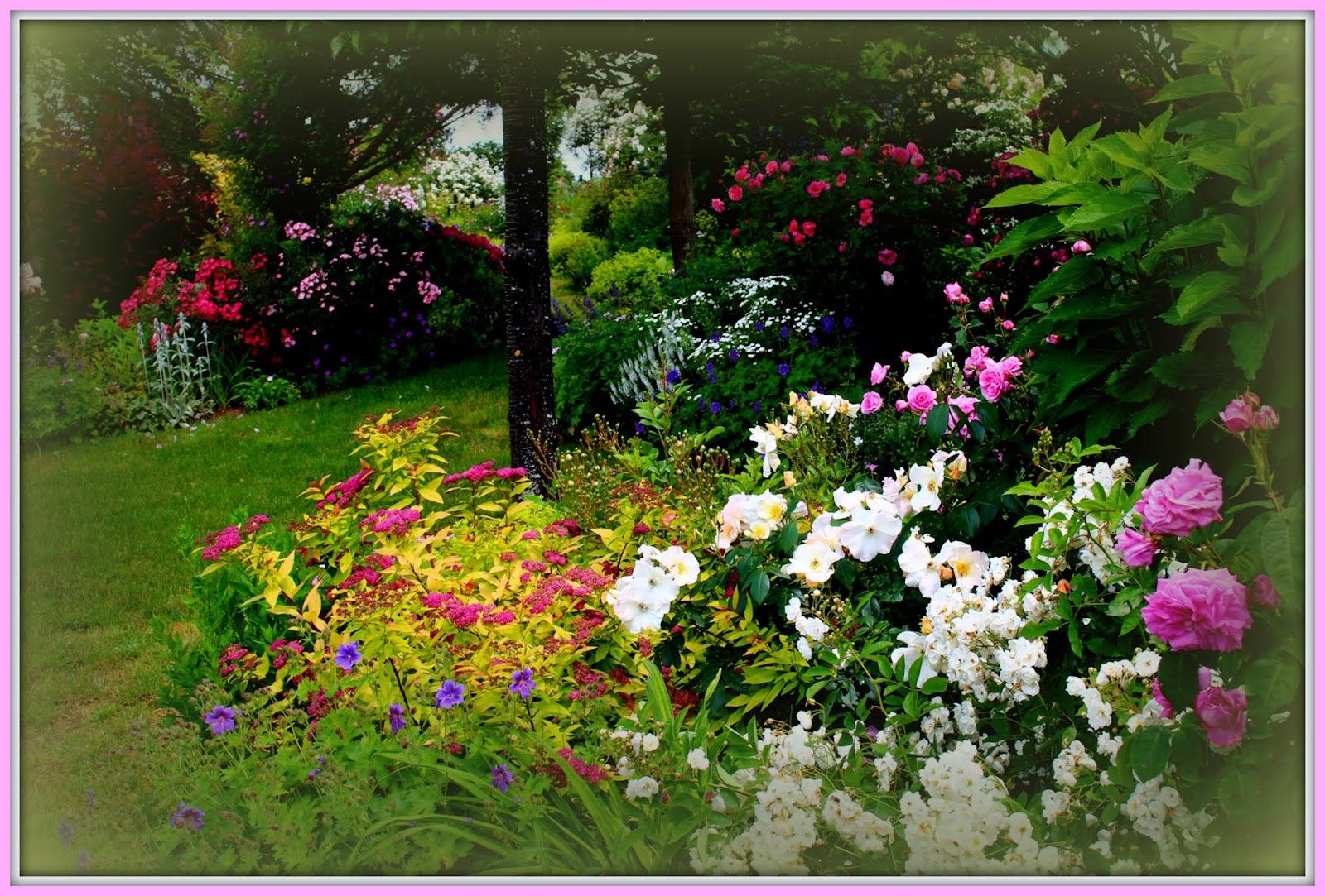 Roses du jardin ch neland g ranium magnificum blue blood - Beau jardin rose and geranium ...