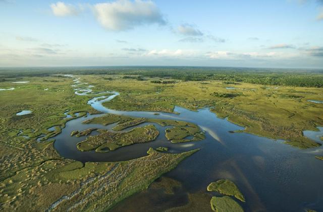 Descubra 10 destaques do Everglades em Miami