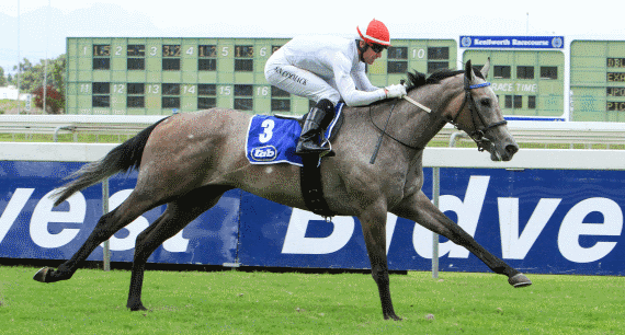 BELA-BELA enters the Vodacom Durban July 2016 as the bookmakers' favourite