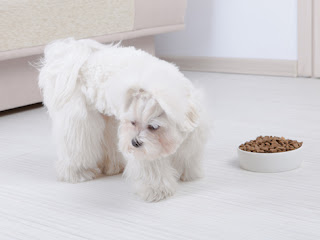 6 Appetite Stimulants for Dogs