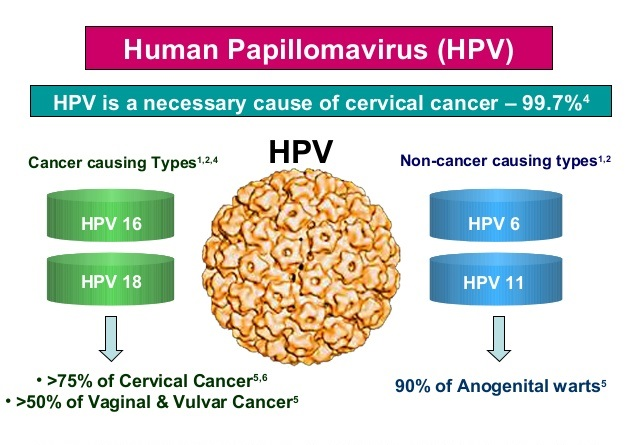 HPV Cervical Cancer Information