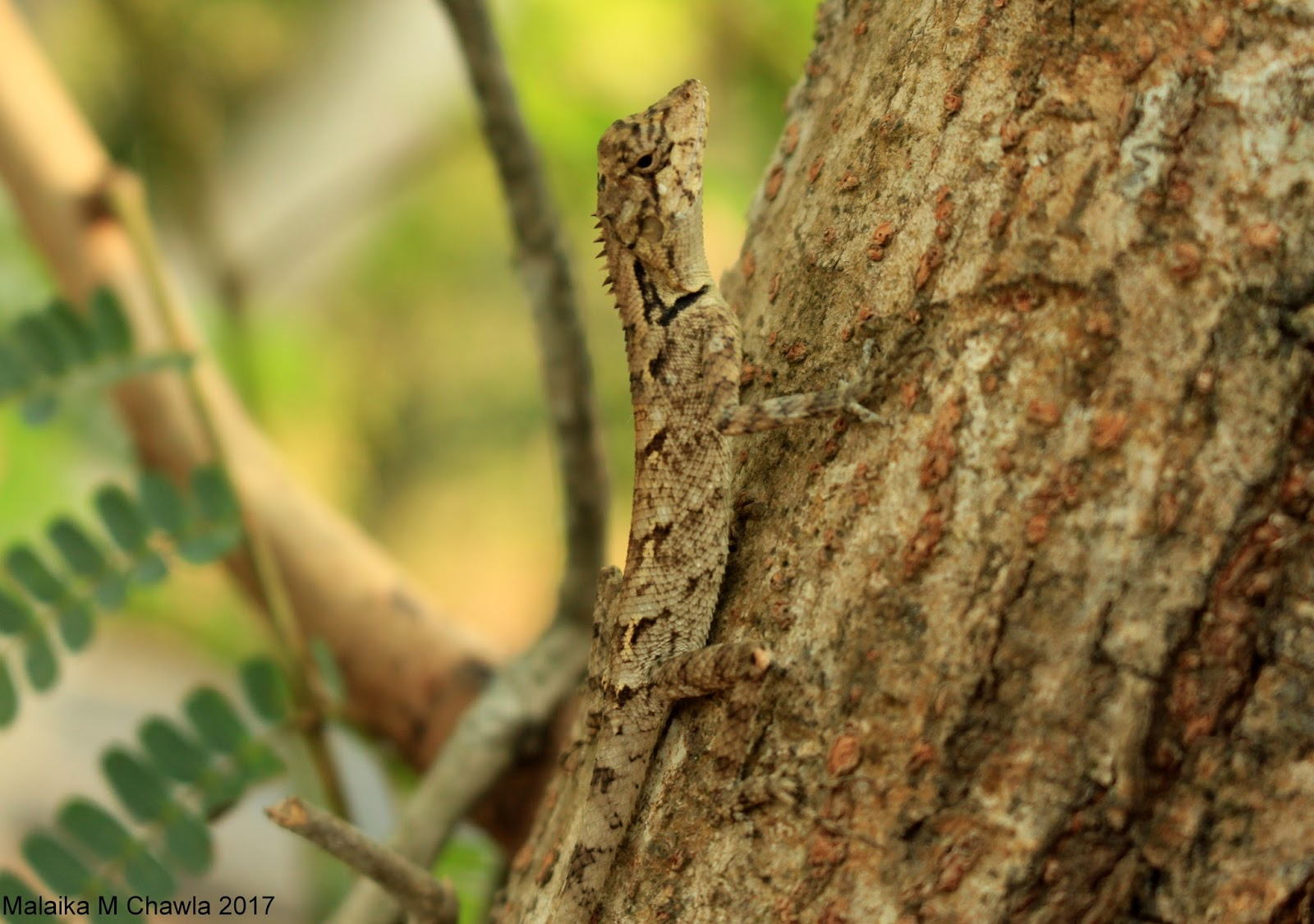 Travelling Lens: Crocodile Survey, Otter Scat and a Five ... - photo#35