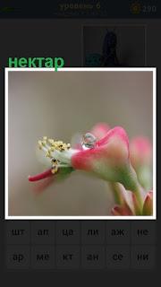 Небольшой цветок в котором имеется нектар