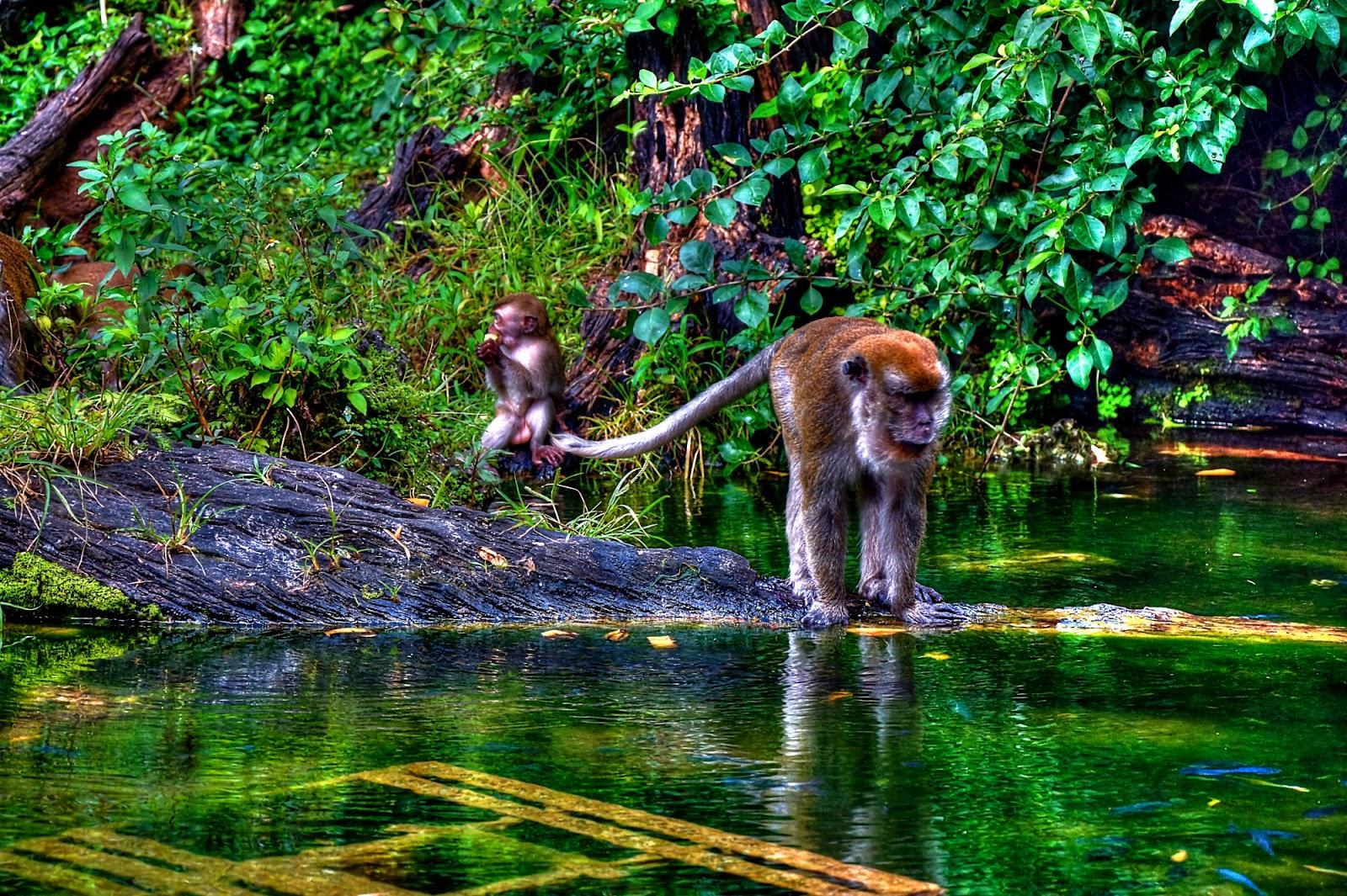 защемления обезьянки в джунглях картинка сколько людей