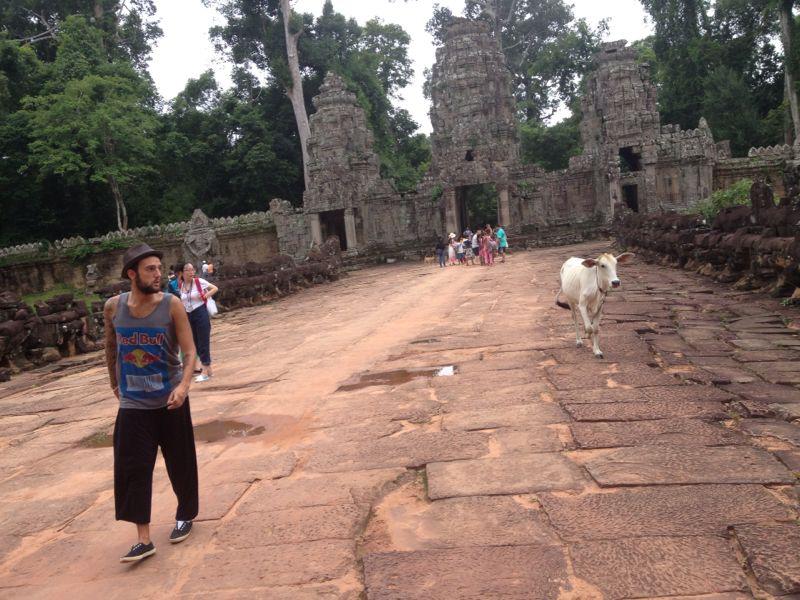 Vaca en Angkor