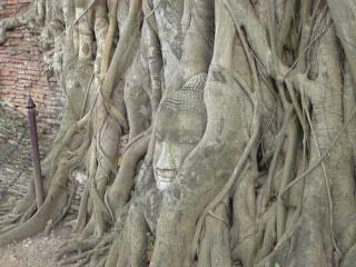 الاماكن السياحية تايلاند