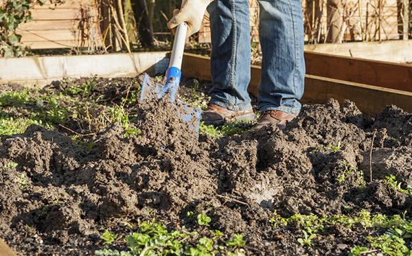 Jardinage facile en terrain argileux Jardinage en janvier