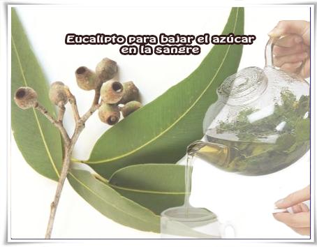 Salud y bienestar, remedios naturales, diabetes, eucalipto