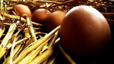 Συντήρηση αποθήκευση αυγών