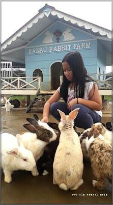 RANAU RABBIT FARM, SABAH