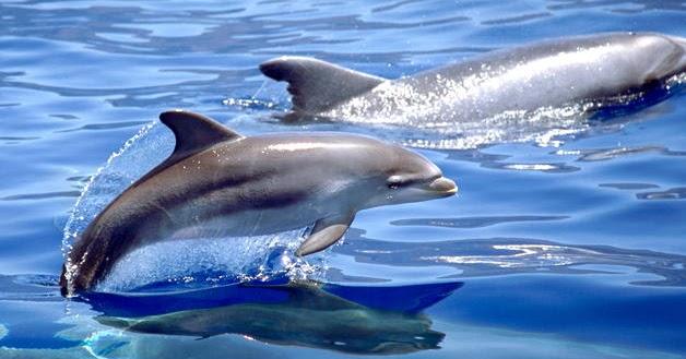 1890f1890 Investigadores del CSIC encuentran restos de insecticidas en delfines | La  Oropéndola Sostenible