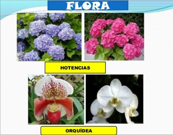 Flora Y Fauna Del Perú: CONOCIENDO CAJAMARCA