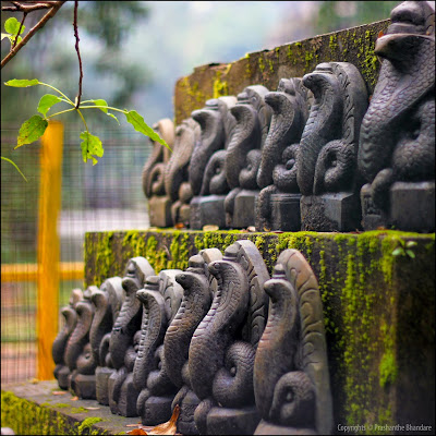 Image result for serpent worship india