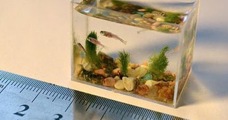 Aquascapejuara Ukuran Dan Bentuk Standar Aquarium