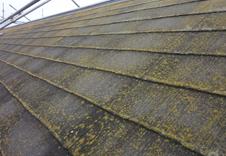 外壁塗装 苔 屋根