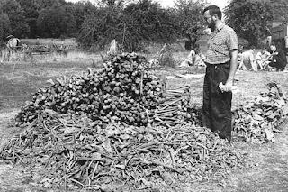 Wola Ostrowiecka. Część kości wydobytych ze zbiorowej mogiły - http://www.nto.pl/