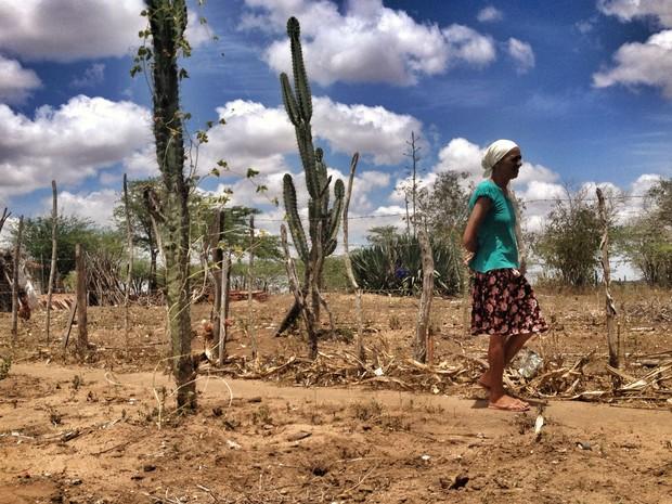 Estiagem deixa 48,3% dos municípios do Ceará em situação de emergência
