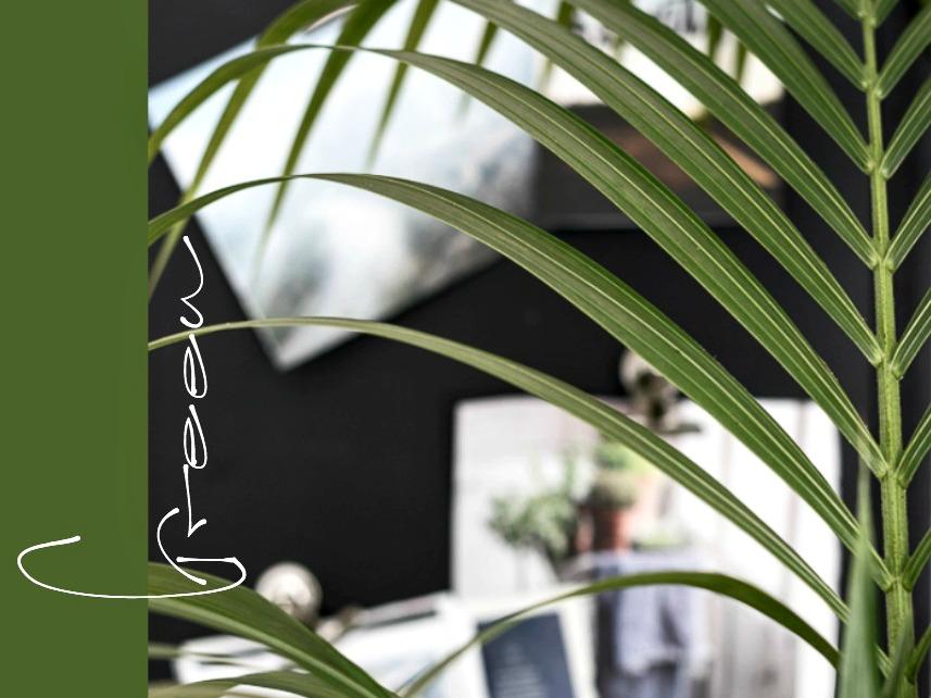 vihersisustaminen, sisustus, sisustaminen, ruokailutila, palmu, kentiapalmu, viherkasvi, Visualaddict, valokuvaaja Frida Steiner, livingspace, inspiraatio, green, green home, interior