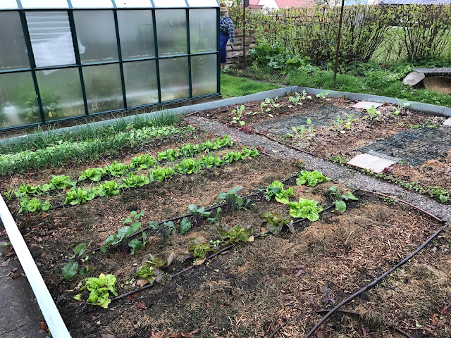 Gemüsegarten mit Salat, Kohlrabi, Zwiebeln, Lauch Anfang Mai (c) by Joachim Wenk
