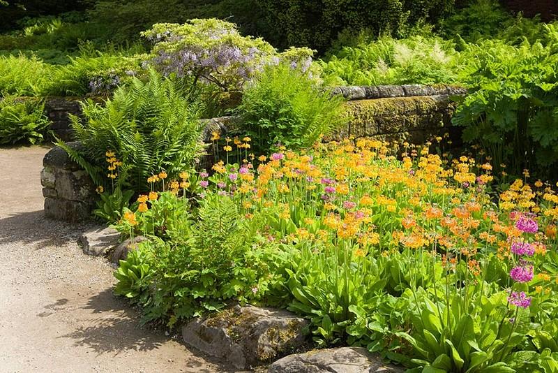 Hostas,helechos y prímulas (Primula beesiana- Primula Candelabra)